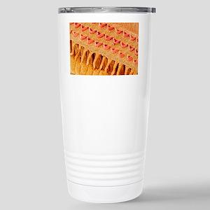 Sensory hair cells in e Stainless Steel Travel Mug