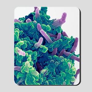 Bacteria infecting a macrophage, SEM Mousepad