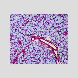 Salivary gland, light micrograph Throw Blanket