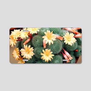 Aylostera 'Apricot Ice' Aluminum License Plate