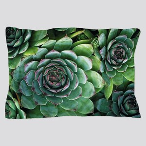 'Hens and chicks' succulents Pillow Case