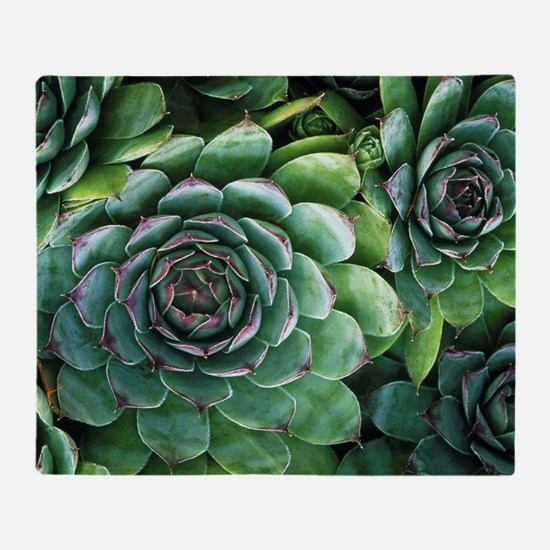 'Hens and chicks' succulents Throw Blanket