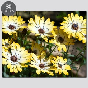 African daisy (Osteospermum 'Buttermilk') Puzzle
