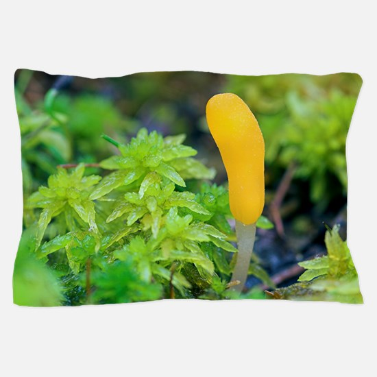 Bog beacon fungus (Mitrula paludosa) Pillow Case