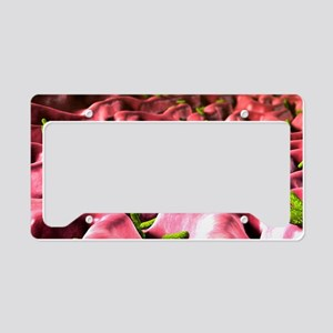 Helicobacter pylori bacteria License Plate Holder