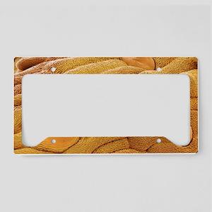 Daisy leaf surface, SEM License Plate Holder