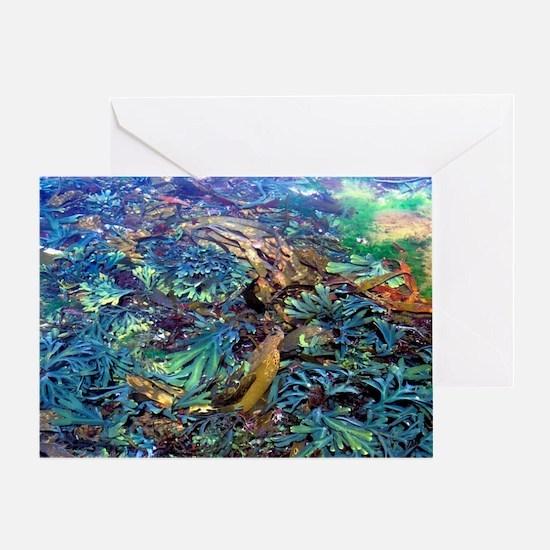 Seaweeds Greeting Card