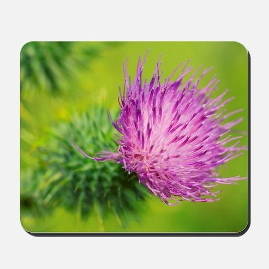 Spear thistle flower Mousepad