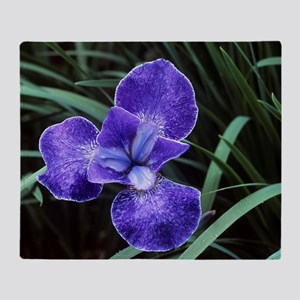 Siberian iris (Iris 'Nottingham Lace Throw Blanket