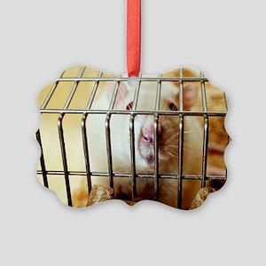 Sprague-Dawley laboratory rat Picture Ornament
