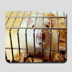 Sprague-Dawley laboratory rat Mousepad