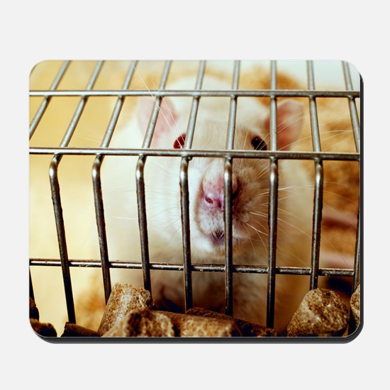 Sprague-Dawley laboratory rat Mousepad