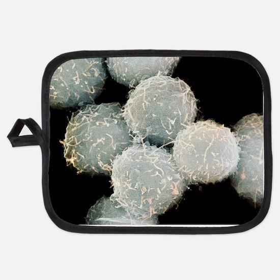 Stem cells, SEM Potholder