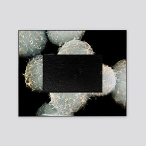 Stem cells, SEM Picture Frame