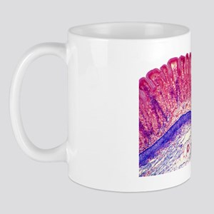 Stomach lining, light micrograph Mug