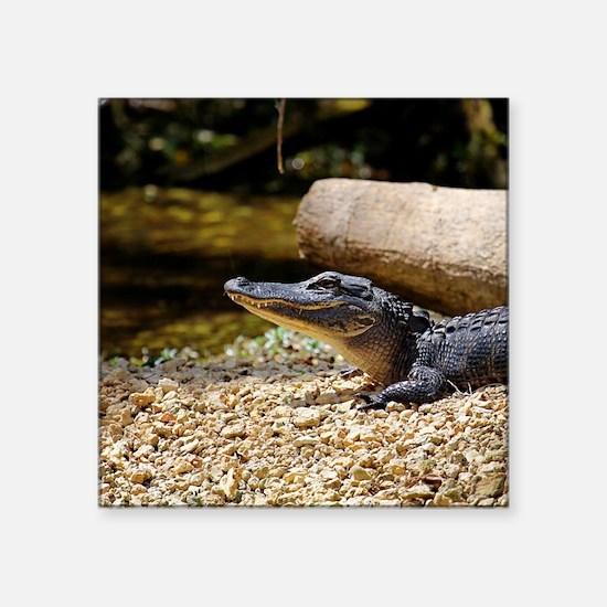 "Baby Alligator Square Sticker 3"" x 3"""