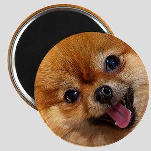 Happy Pomeranian Magnet