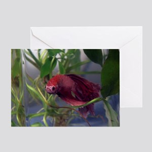 red betta male Greeting Card