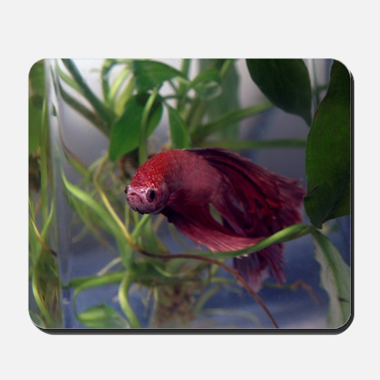 red betta male Mousepad