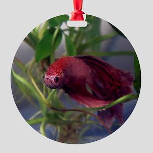 red betta male Round Ornament