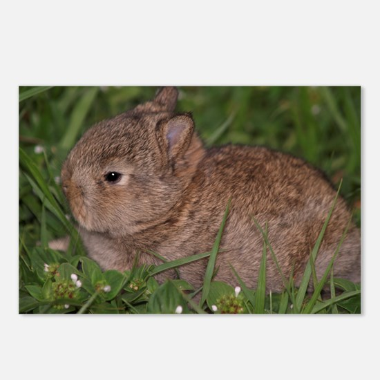 baby Netherland dwarf Postcards (Package of 8)