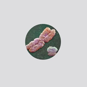 Male sex chromosomes, SEM Mini Button