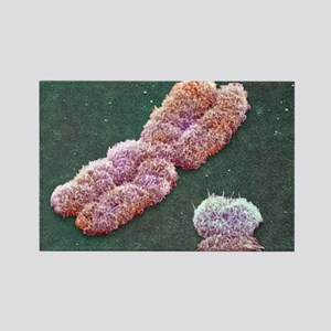 Male sex chromosomes, SEM Rectangle Magnet