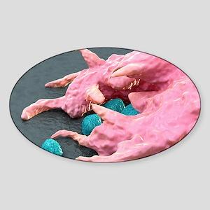 Macrophage engulfing bacteria, artw Sticker (Oval)