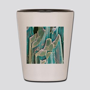 Muscle fibres, SEM Shot Glass