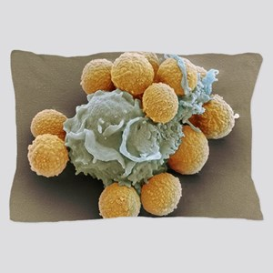 Phagocytosis of fungal spores, SEM Pillow Case