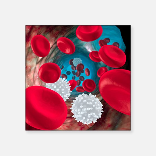 """Red and white blood cells Square Sticker 3"""" x 3"""""""