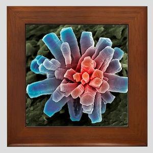 Calcium phosphate crystal, SEM Framed Tile