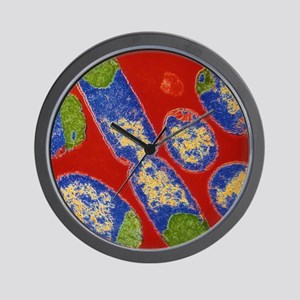 E. coli bacteria Wall Clock