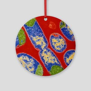 E. coli bacteria Round Ornament