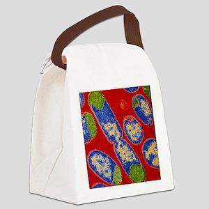 E. coli bacteria Canvas Lunch Bag