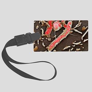 Helicobacter pylori bacteria, SE Large Luggage Tag