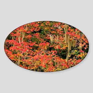 Common witch's hair lichen Sticker (Oval)