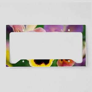 Pansies (Viola wittrockiana) License Plate Holder