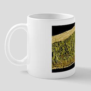 Leaf structure, SEM Mug