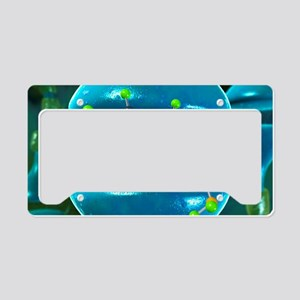Serotonin neurotransmitter mo License Plate Holder