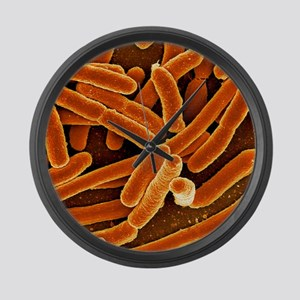 Escherichia coli bacteria, SEM Large Wall Clock