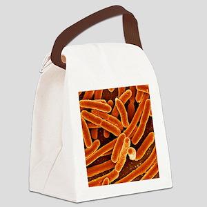 Escherichia coli bacteria, SEM Canvas Lunch Bag