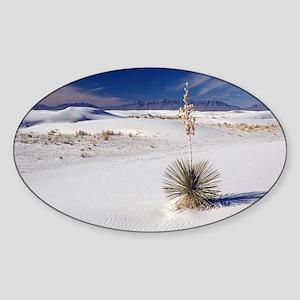 Soaptree yucca (Yucca elata) Sticker (Oval)