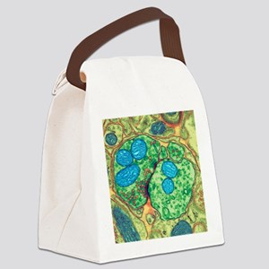 Synapse nerve junction, TEM Canvas Lunch Bag