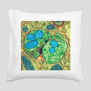 Synapse nerve junction, TEM Square Canvas Pillow