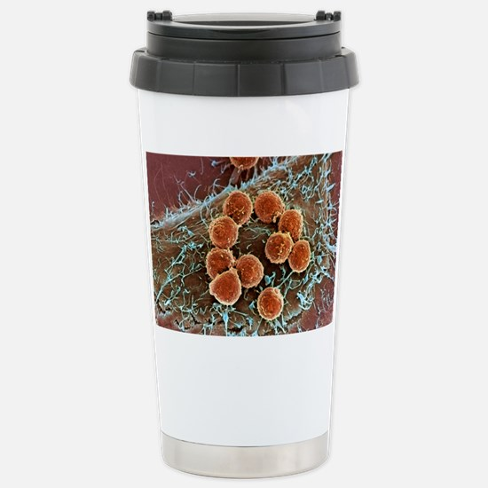 T lymphocytes and cance Stainless Steel Travel Mug