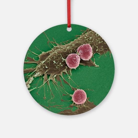 T lymphocytes and cancer cells, SEM Round Ornament