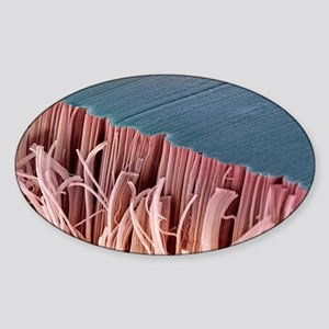 Tendon, SEM Sticker (Oval)