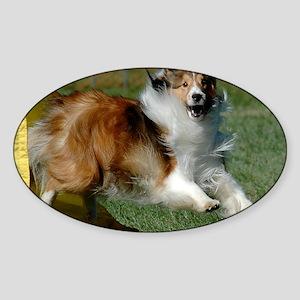 Shetland Sheepdog Cooper Sticker (Oval)