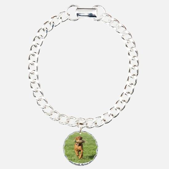 FOX RED LABRADOR Bracelet
